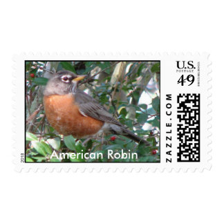 American Robin Postage