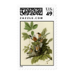American Robin Postage Stamps