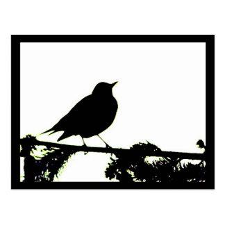 American Robin Silhouette Postcard