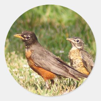 American Robin Classic Round Sticker