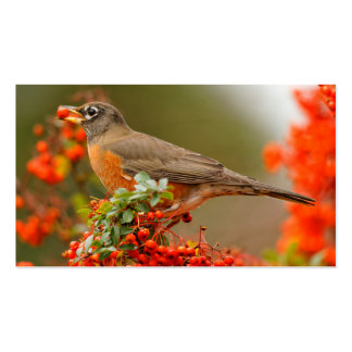 American Robin with a Pyracantha Pomme Business Card
