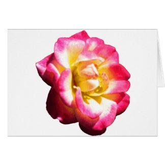 American Rose Society Miniature 038 Card