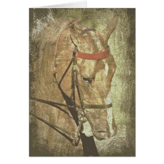 American Saddlebred Card
