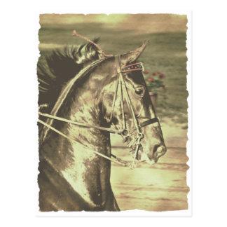 American Saddlebred Faux Vintage Postcard