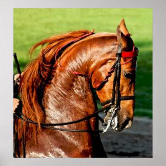 American Saddlebred Horse Poster Print