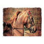 American Saddlebred Postcard