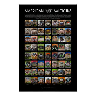 """American Salticids"" Jumping Spider Faces Poster"