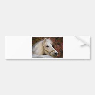 American Shetland Bumper Sticker