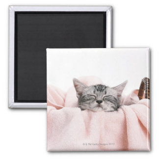 American Shorthair 10 2 Inch Square Magnet