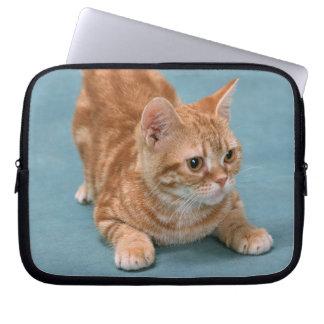 American Shorthair 3 Laptop Sleeves