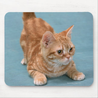 American Shorthair 3 Mouse Pad