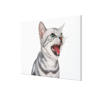 American Shorthair 5 Stretched Canvas Print