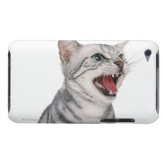 American Shorthair 6 Barely There iPod Cover