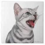 American Shorthair 6 Large Square Tile