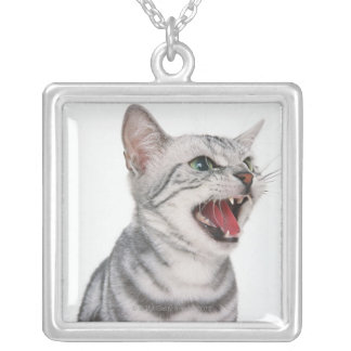 American Shorthair 6 Silver Plated Necklace