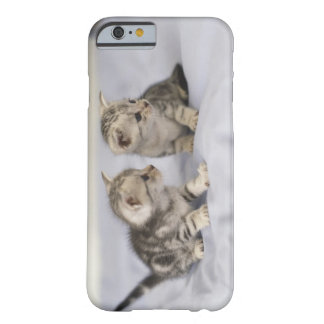American Shorthair 7 Barely There iPhone 6 Case