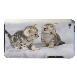 American Shorthair 7 Barely There iPod Case