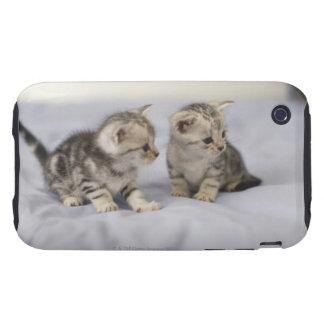 American Shorthair 7 Tough iPhone 3 Cases