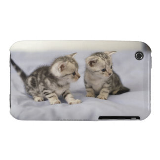 American Shorthair 7 iPhone 3 Cases