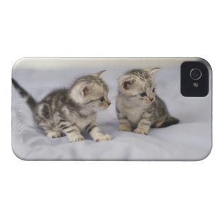 American Shorthair 7 Case-Mate iPhone 4 Case