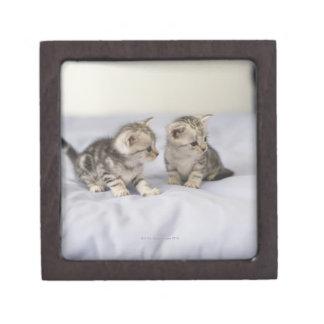 American Shorthair 7 Premium Trinket Boxes