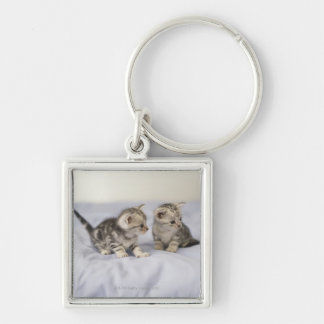American Shorthair 7 Silver-Colored Square Keychain