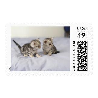 American Shorthair 7 Stamp
