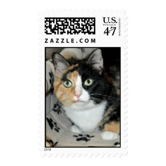 American Shorthair Calico Cat Postage Stamps