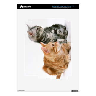 American Shorthair Cat 2 Decal For iPad 3