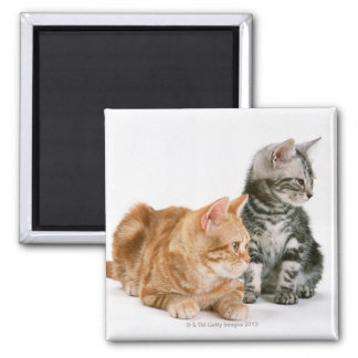 American Shorthair Cat 2 Fridge Magnets