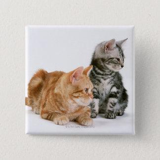 American Shorthair Cat 2 Pinback Button