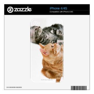 American Shorthair Cat 2 iPhone 4 Decal