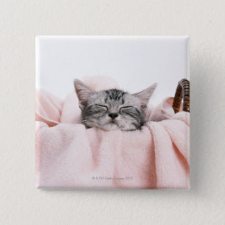 American Shorthair Cat Button