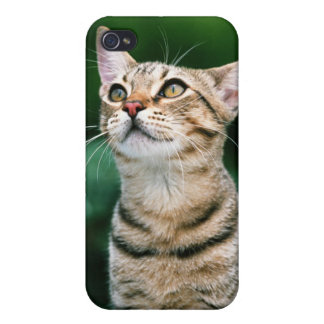American Shorthair Cover For iPhone 4