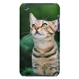 American Shorthair iPod Touch Case