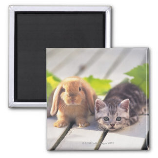 American Shorthair; is the most popular and most 2 Inch Square Magnet