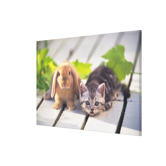 American Shorthair; is the most popular and most Canvas Print