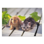 American Shorthair; is the most popular and most Greeting Card
