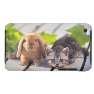 American Shorthair; is the most popular and most iPod Touch Case-Mate Case