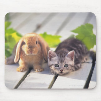 American Shorthair; is the most popular and most Mouse Pad