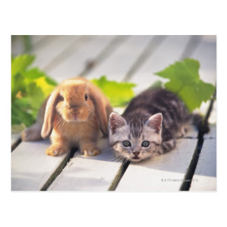 American Shorthair; is the most popular and most Postcard