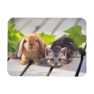 American Shorthair; is the most popular and most Rectangular Photo Magnet