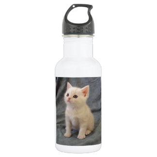 AMERiCAN SHORTHAiR KiTTEN Water Bottle