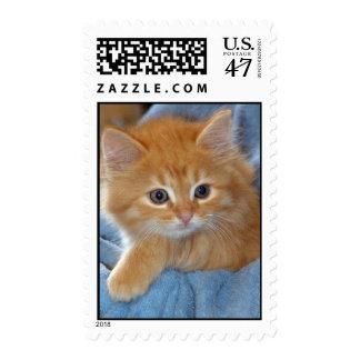 American Shorthair Orange Kitten Postage Stamps
