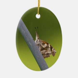 American Snout Butterfly on Green Background Ceramic Ornament