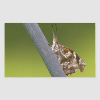 American Snout Butterfly on Green Background Rectangular Sticker