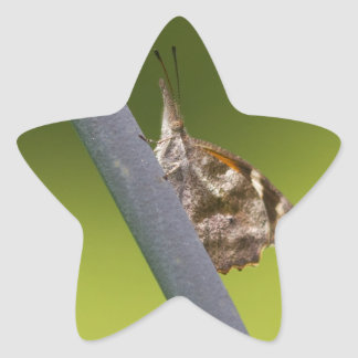 American Snout Butterfly on Green Background Star Sticker