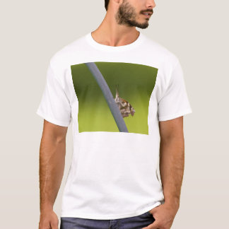 American Snout Butterfly on Green Background T-Shirt