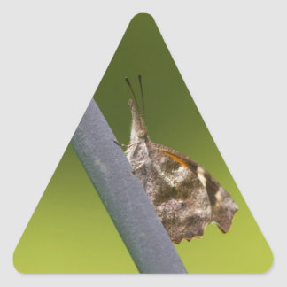 American Snout Butterfly on Green Background Triangle Sticker