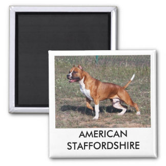 American Staffordshire Magnet